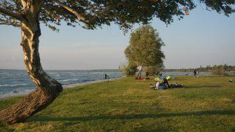 Trawiasta plaża Balatonu