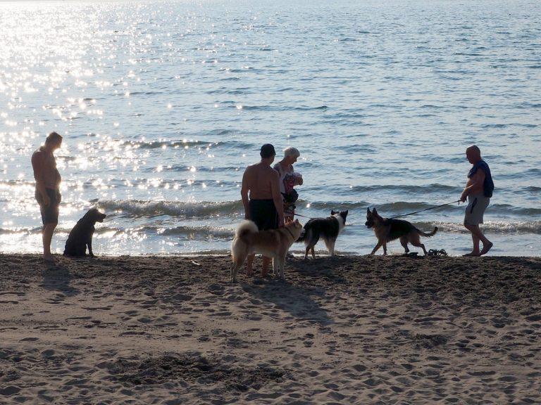 Część plaży dla psów